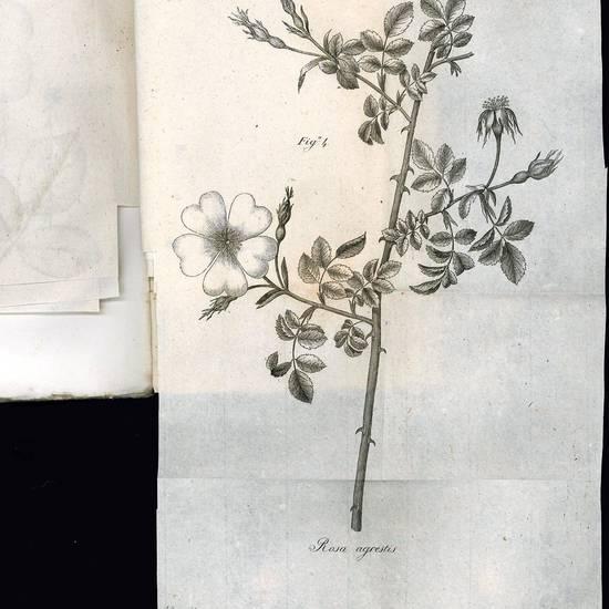 Flora Veronensis quam in prodromum Floræ Italiæ Septentrionalis exhibet Cyrus Pollinius tomus primus [-tertius]