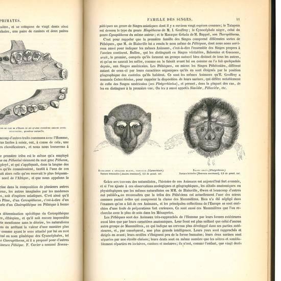 Histoire naturelle des mammiferes avec l'indication dee leurs moers, et de leurs rapports avec les arts, le commerce et l'agricolture. Primates, cheiropteres, insectivores et rongeurs.