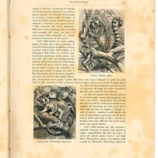La storia naturale illustrata. I mammiferi descritti e figurati da Carlo Vogt e Federico Specht. Traduzione con note e aggiunte del prof. Michele Lessona.