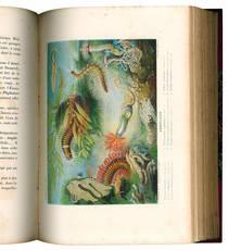 Le monde de la mer par Alfred Frédol illustré de 22 planches tirées en couleur de 14 planches en noir tirées a part et de 320 vignettes intercalées dans le texte. Deuxiéme édition.