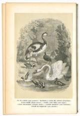 Histoire naturelle des oiseaux suivant la classification de M. Isidore Geoffroy-Saint-Hilaire, avec l'indication de leurs moeurs et de leurs rapports avec les arts, le commerce et l'agriculture / par Emm. Le Maout